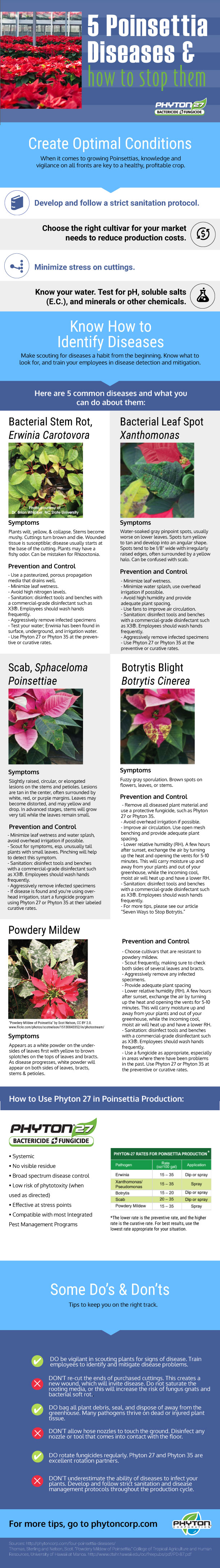 poinsettia-infographic-for-edge